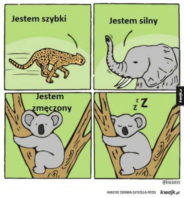 A ty jakim zwierzęciem jesteś?