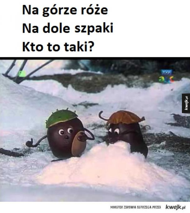 Polaki robaki