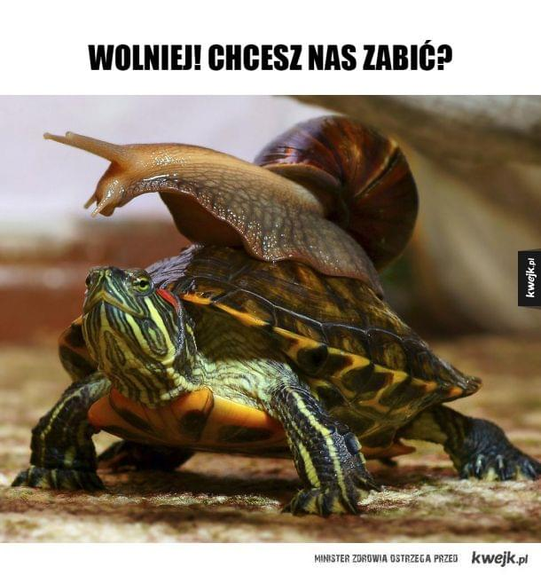 ślimak i żółw