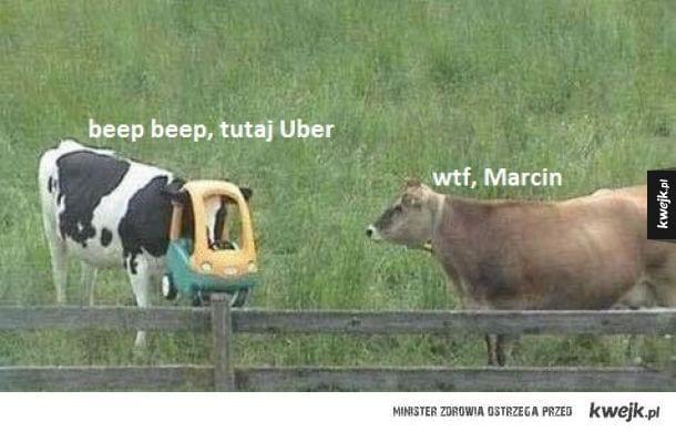 Krowa śmieszek