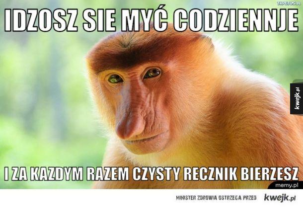 Małpa Polak