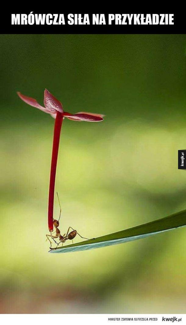 Mrówcza siła