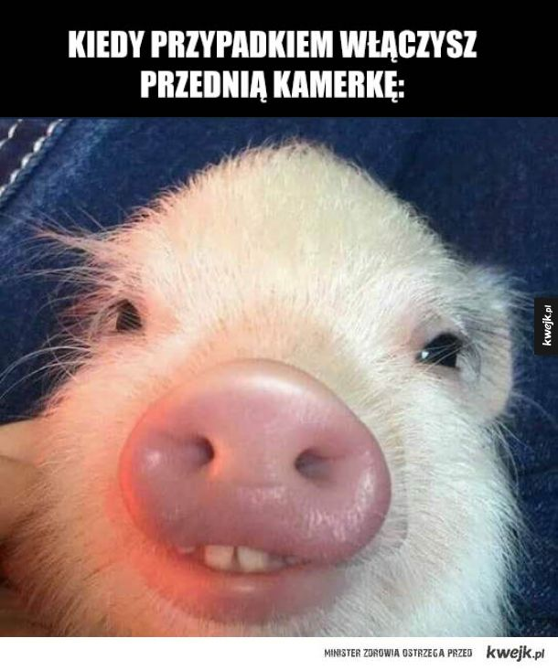 epicki świniak