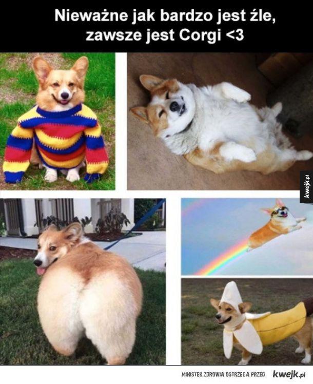 Corgi zawsze poprawią humor