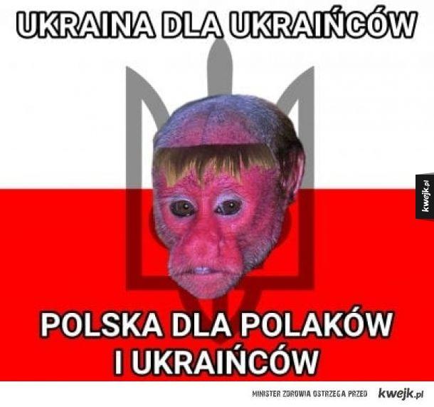 Memy z nosaczami sundajskimi, pośmiejmy się też z Ukraińców zamieszkałych w Polsce