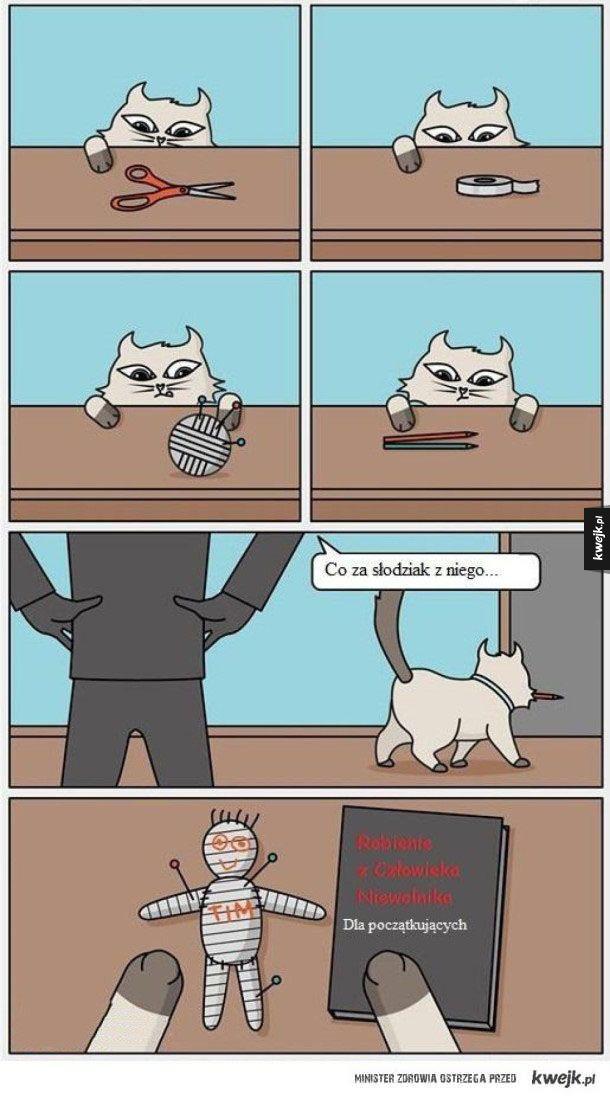 Zastanawiałeś się kiedyś po co kotu te rzeczy