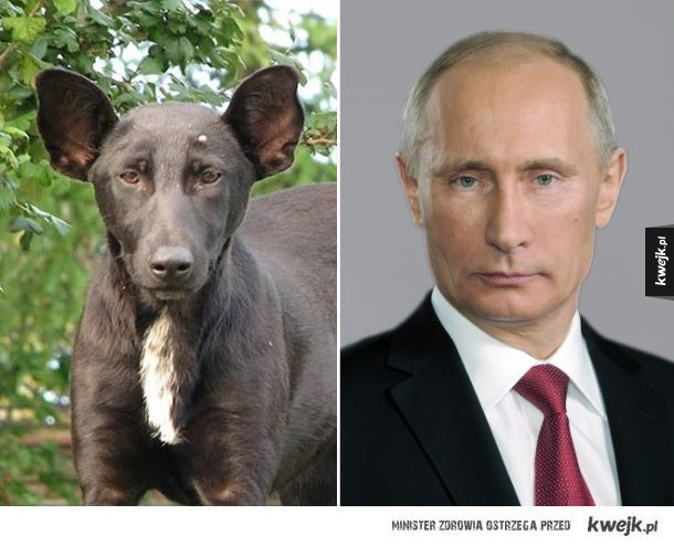 Zwierzęta, które wyglądają jak ktoś sławny!