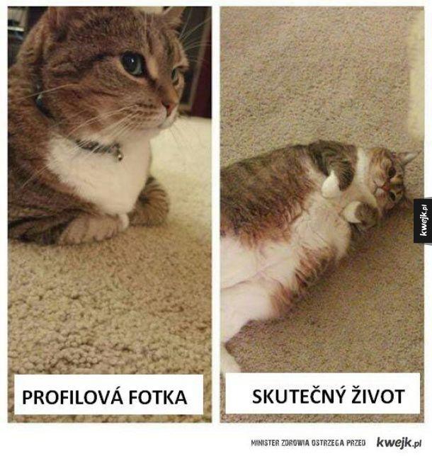 Czeskie memy to mistrzostwo