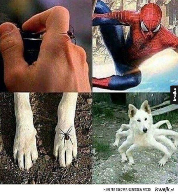 Spider doge.
