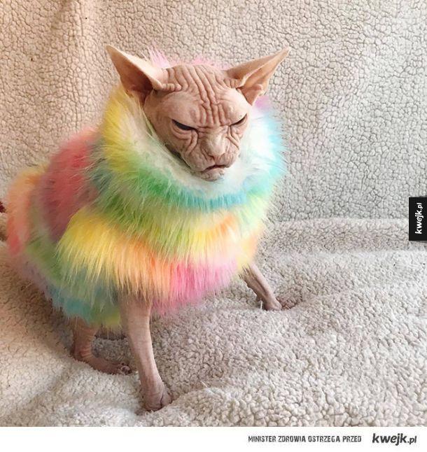 Poznaj Lokiego! Najbardziej wkurzonego kota na świecie!