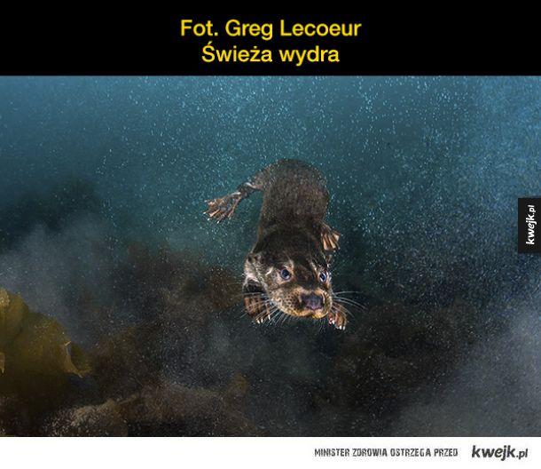 Najlepsze podwodne fotografie