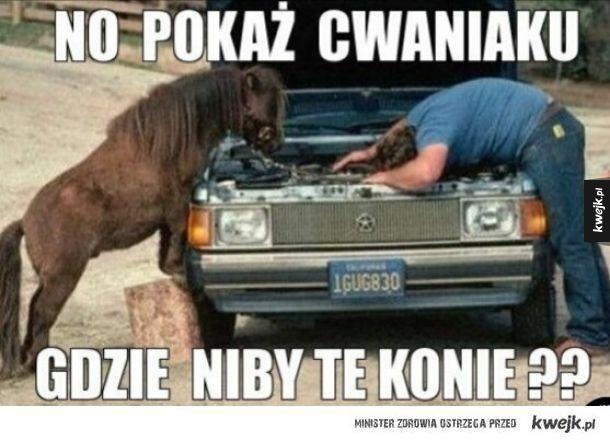 Gdzie te konie?