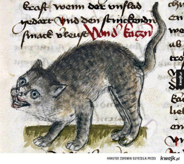Brzydkie średniowieczne kotki i pieski