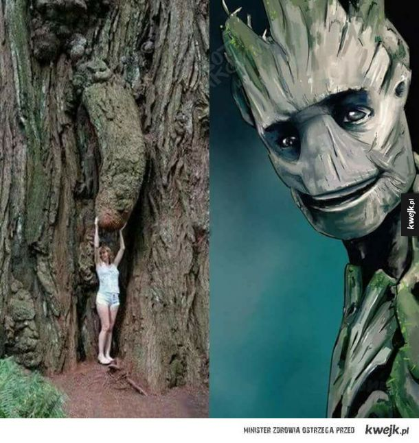 Jestem Groot