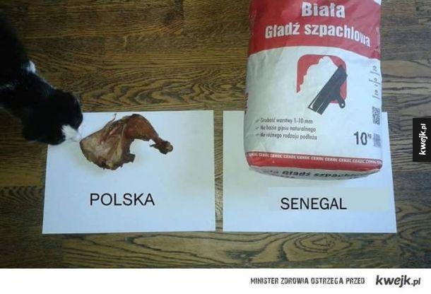 Polska vs Senegal XD