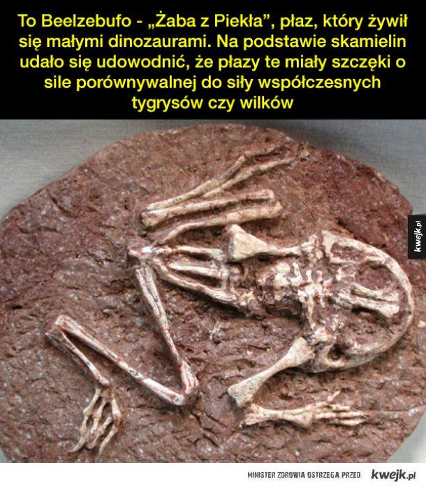 Niezwykłe skamieliny i inkluzje w bursztynie