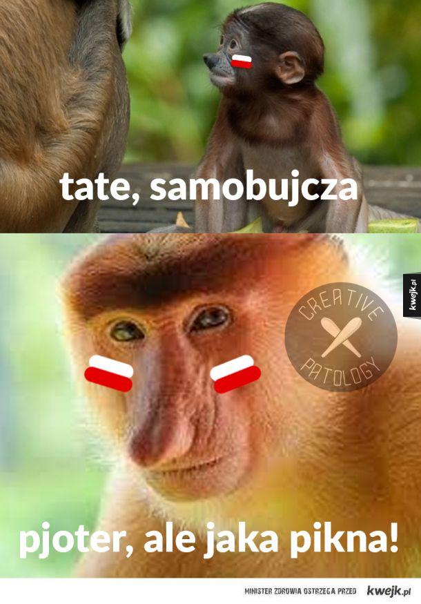Polska Senegal Mem