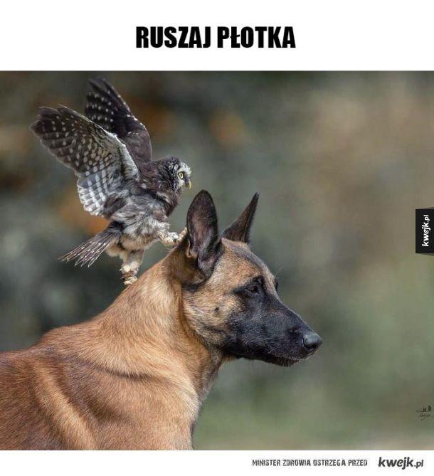 RUSZAJ PŁOTKA!