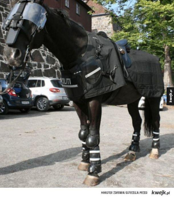 Taktyczny koń policyjny.