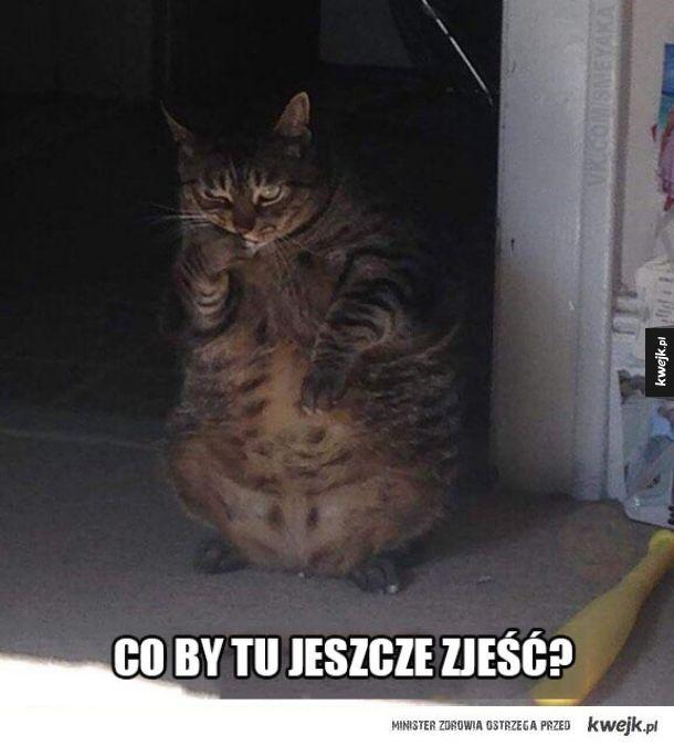 Gruby kot