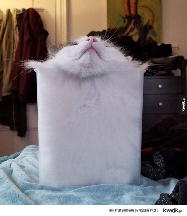 Dowód na to, że koty są cieczą