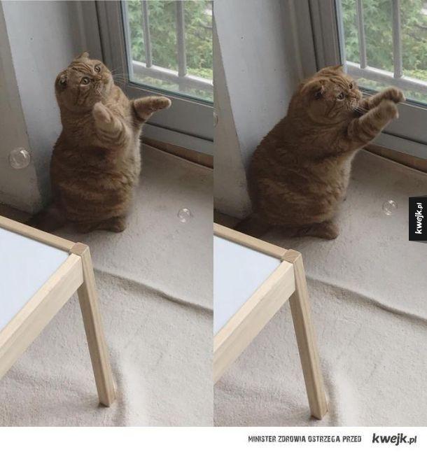 Kot bawi się z bąbelkami