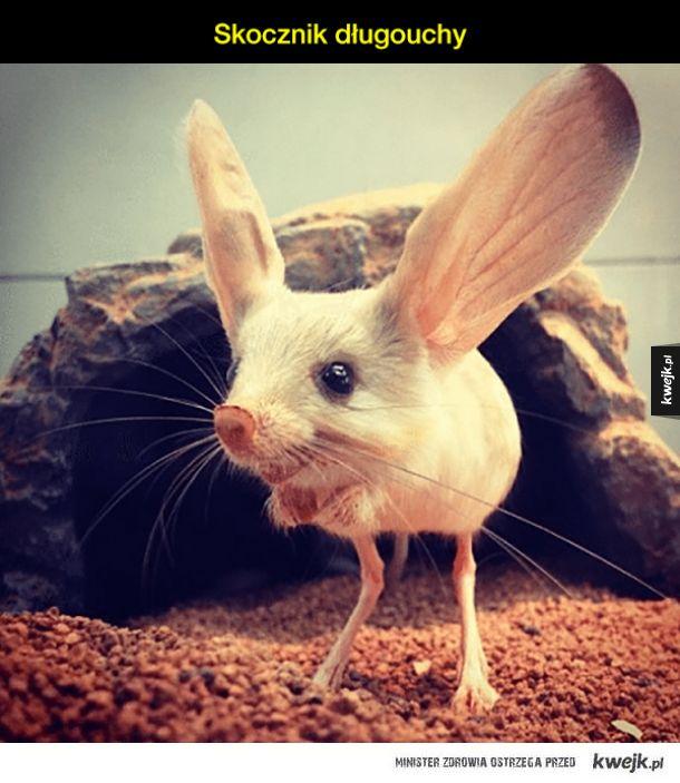 Najdziwniejsze zwierzęta na ZIemi