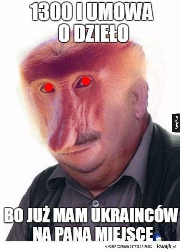 Janusz przedsiębiorca