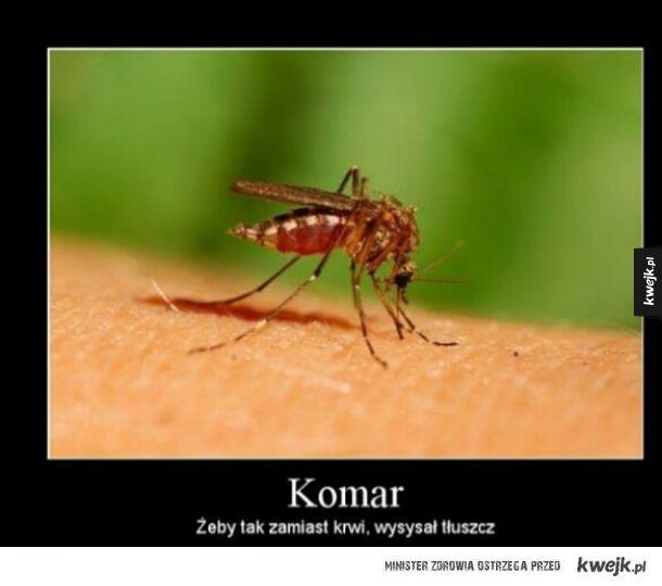 Komar.