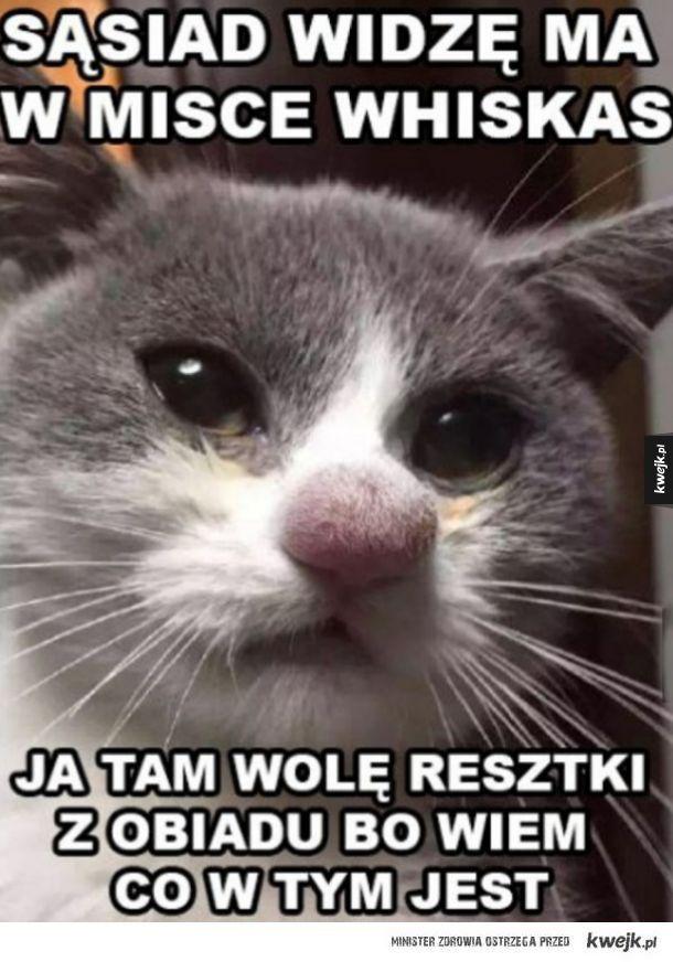 Koteł wie co dobre.