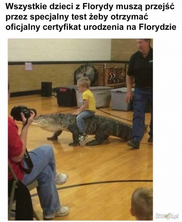 Jazda na aligatorze