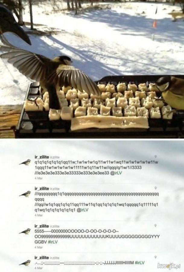 Ptaki mają dla nas wiadomość