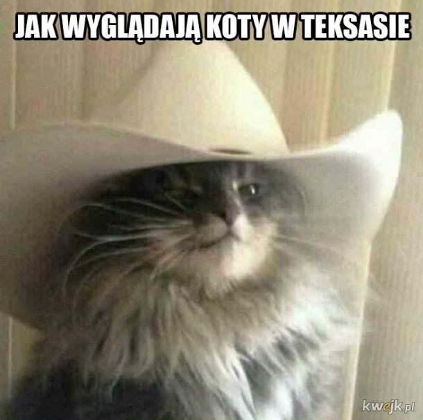 Kot z Teksasu