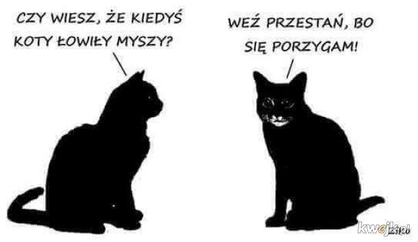 Koty dzisiaj