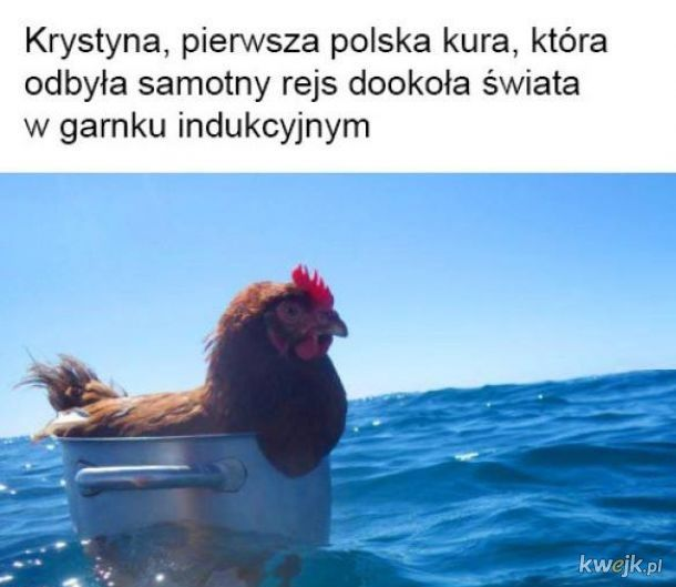 Pierwsza kura