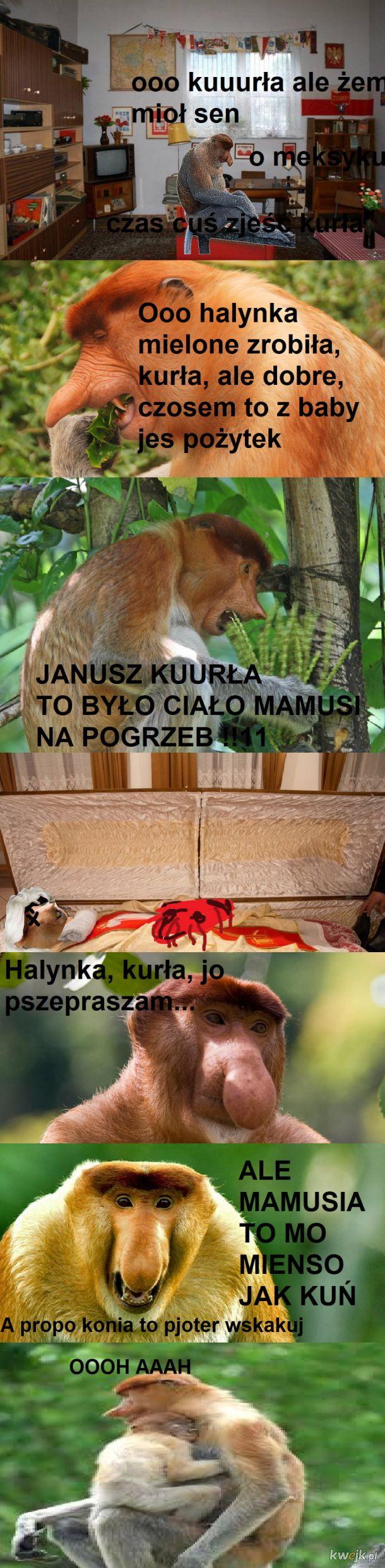 historia janusza cz. 4
