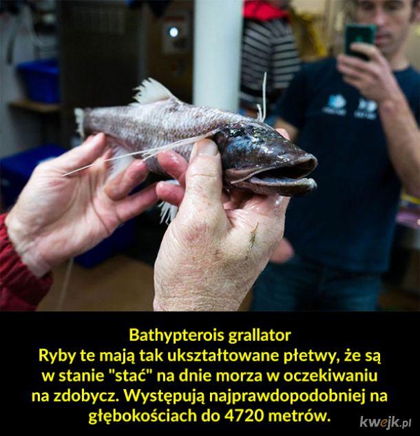 Dziwne australijskie zwierzęta, tym razem z morskich głębin