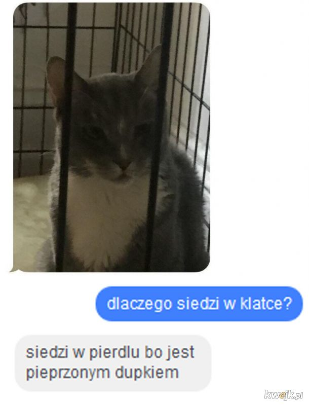Kot siedzi w pierdlu