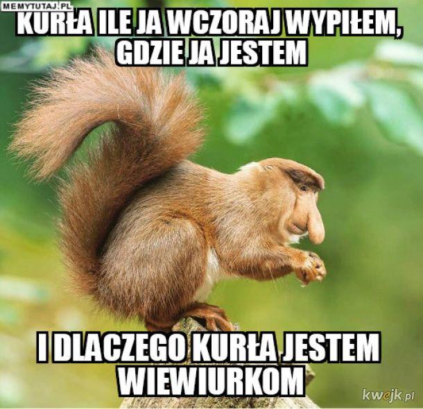 Janusz wiewiurka