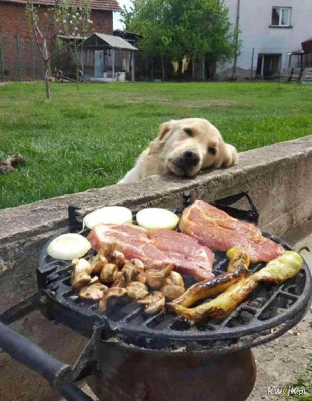 Pieski, które totalnie i pod żadnym pozorem nie chcą twojego jedzenia...