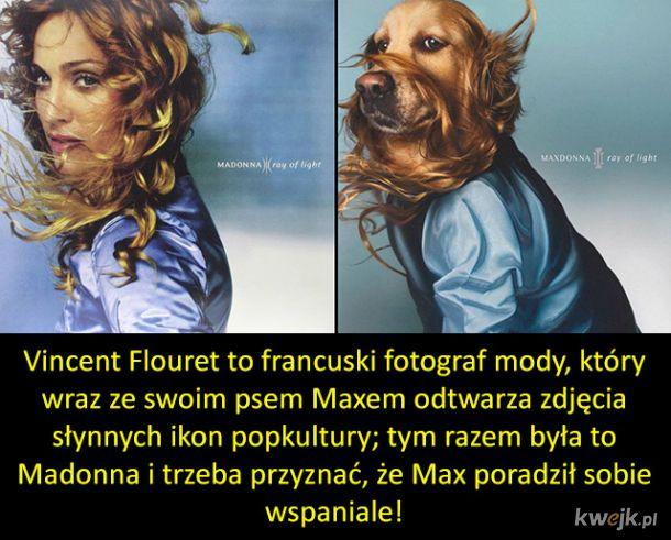 Pies Max vs Madonna