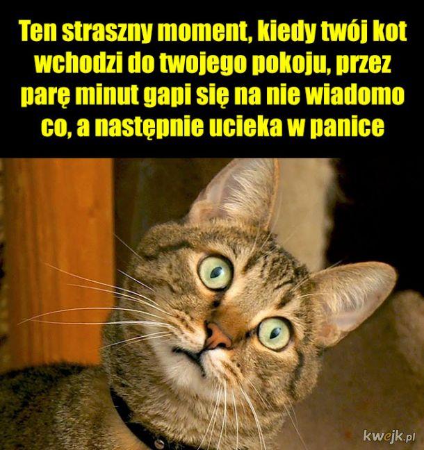 Co ten koteł...