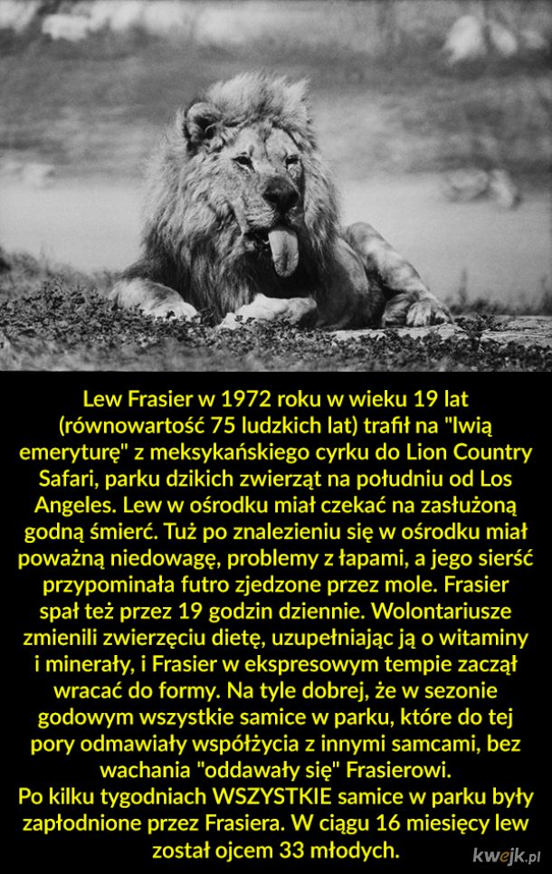 Dzielny lew