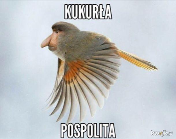Nowy gatunek ptaka