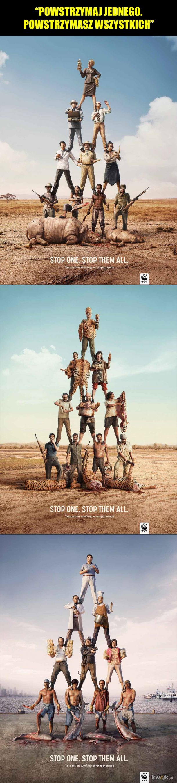Mocna kampania WWF przeciwko zabijaniu dzikich zwierząt