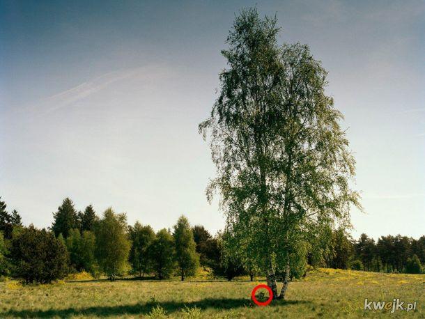 Test na spostrzegawczość: potrafisz znaleźć snajpera na wszystkich zdjęciach?
