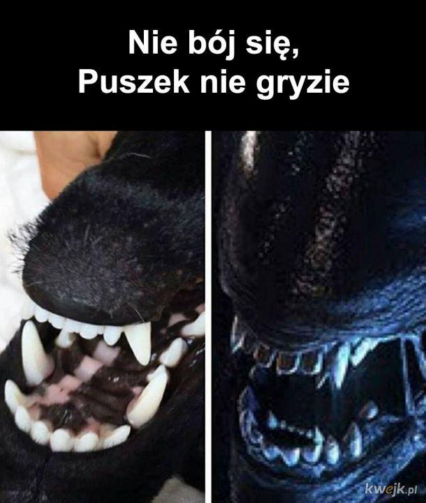 Puszek