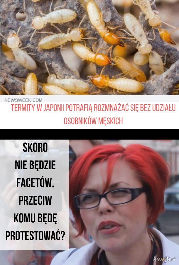 Problemy współczesnego feminizmu