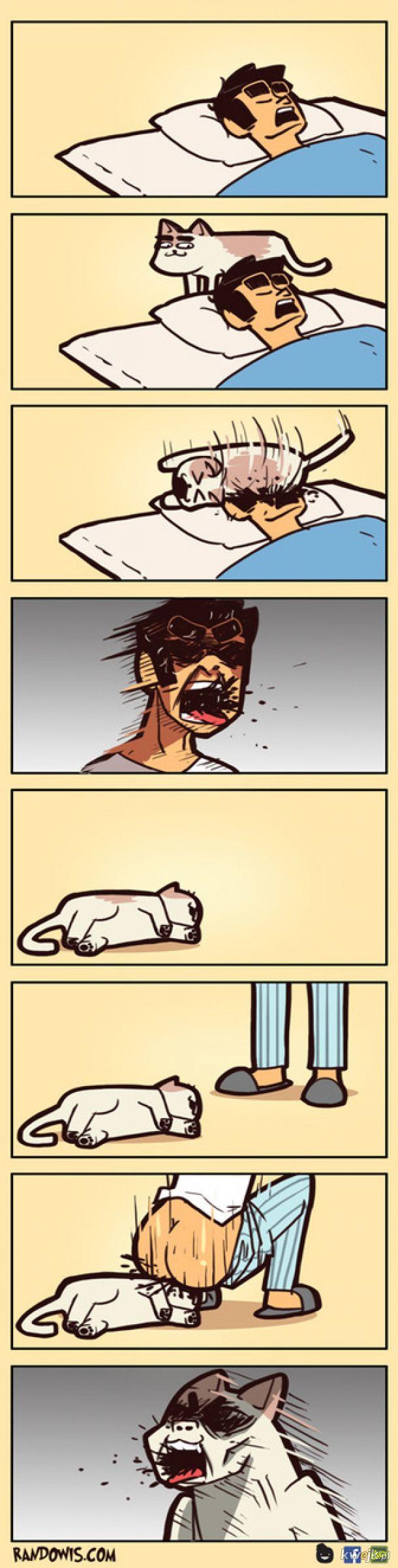 Zemsta na kocie