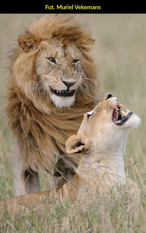 Natura od tej zabawniejszej strony - finaliści konkursu Comedy Wildlife Photos